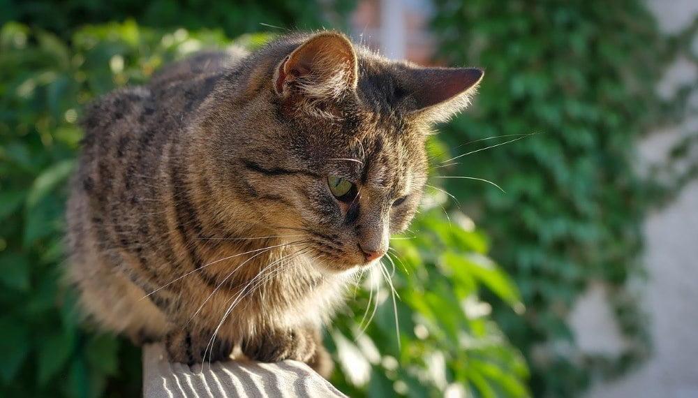 chat sur balcon